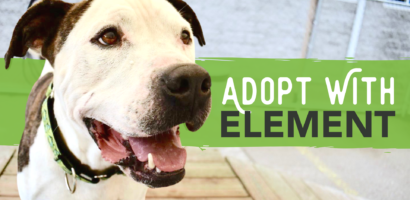 Adopt with Element. Photo of dog